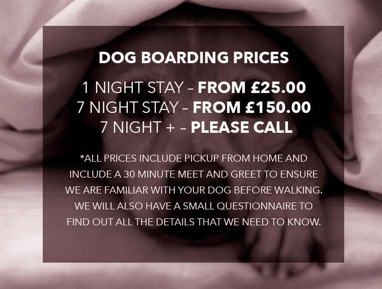Dog boarding prices
