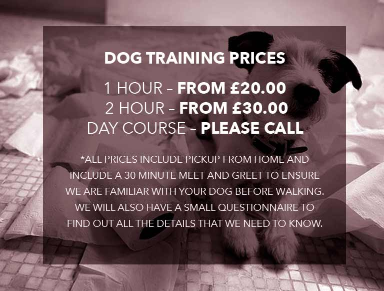 Dog Training Ferring